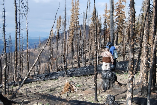 (Brian Maffly | The Salt Lake Tribune) The Brian Head fire has left steep slopes vulnerable to severe erosion, including along the Spruce Trail near Bowery Creek, seen here on Sept. 8, 2017. Thousands of acres are being covered with straw dropped from helicopters in an emergency effort to stabilize the soils. The fire also appears to have tainted water supplies for the town of Panguitch.