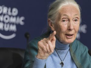 (Alessandro della Valle/Keystone via AP, File) In this Jan. 22, 2020, file photo Jane Goodall, English primatologist and anthropologist, addresses the media during a news conference as part of the 50th annual meeting of the World Economic Forum (WEF) in Davos, Switzerland. Goodall has been named the winner of the 2021 Templeton Prize.