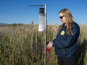 (Rick Egan  |  The Salt Lake Tribune) Biologist Nadja Reissen checks a mosquito trap in a field north of the Salt Lake International Airport, Thursday, Sept. 12, 2019.