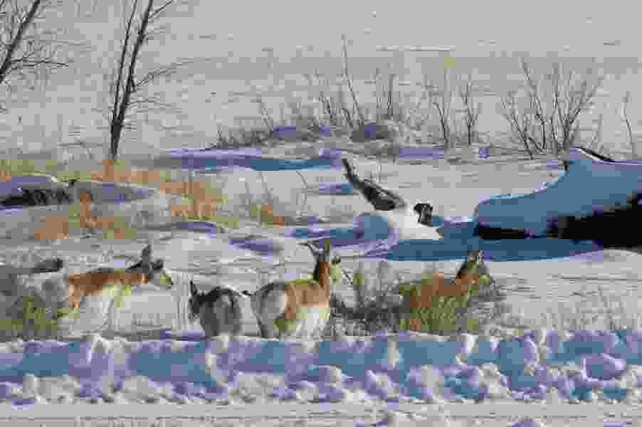 Letter: No oil wells in wildlife refuges