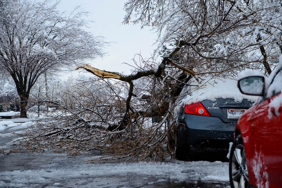 (Trent Nelson | The Salt Lake Tribune) A fallen branch on a car in Salt Lake City after a storm on Friday March 29, 2019.