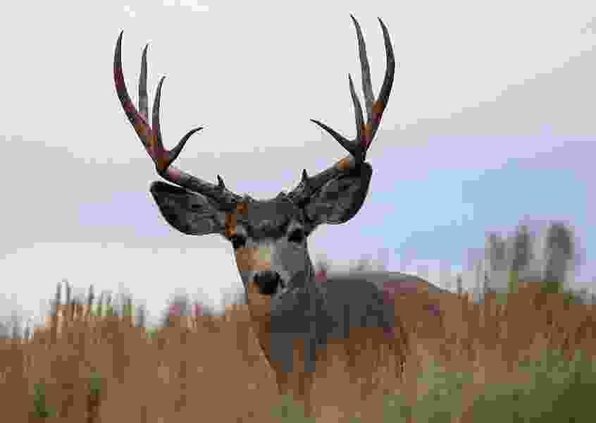 Six tips for having a successful rifle deer hunt in Utah