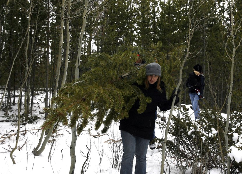 Time to get a permit for cutting a Christmas tree in a Utah national forest - Time To Get A Permit For Cutting A Christmas Tree In A Utah National