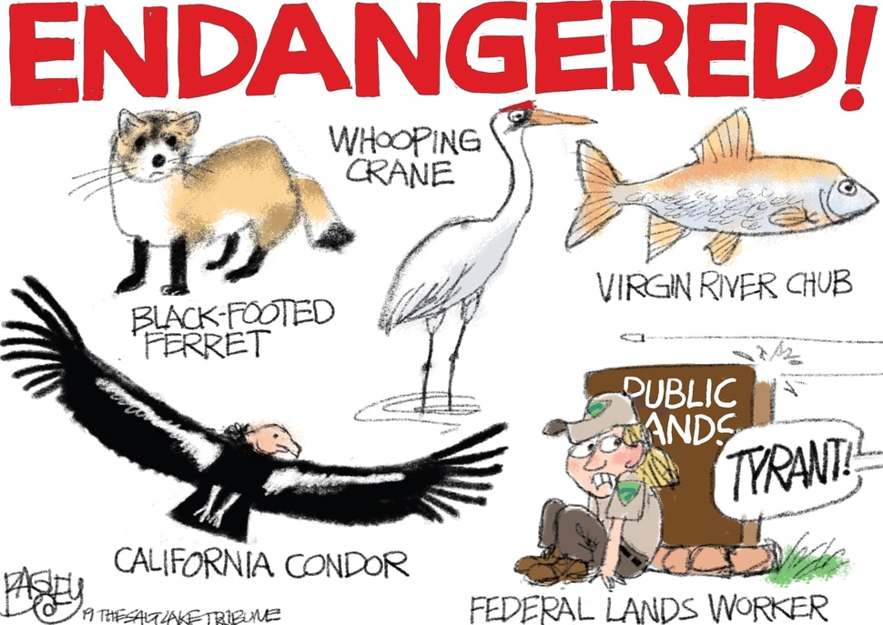 (Pat Bagley | The Salt Lake Tribune) This cartoon, titled Endangered Species, appears in The Salt Lake Tribune on Wednesday, Oct. 23, 2019.