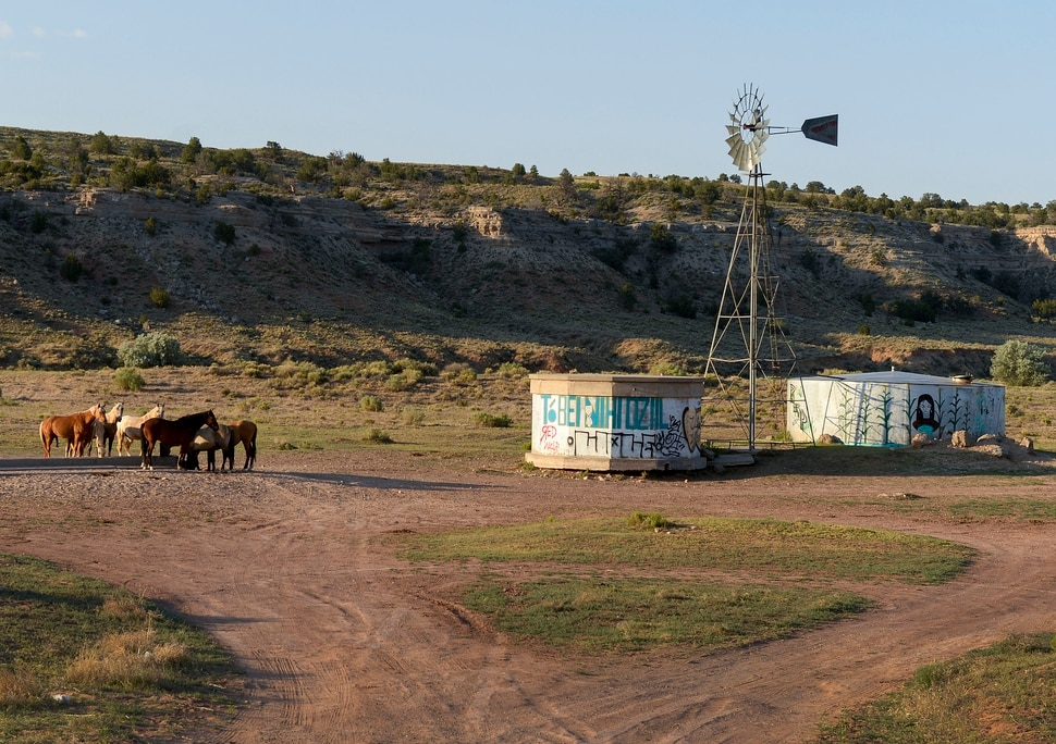 (Leah Hogsten | The Salt Lake Tribune) Horses gather at a water well on the Navajo Nation, June 23, 2020.