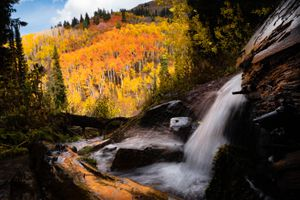 (Francisco Kjolseth | The Salt Lake Tribune) Trees explode with fall color along the confluence of Red Pine Road Trail and Little Water Trail at the top of Millcreek Canyon on Thursday, Oct. 7, 2021.