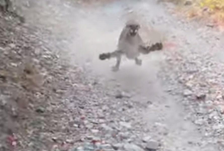 Man Escapes Cougar: 'Dude, I Don't Feel Like Dying Today'
