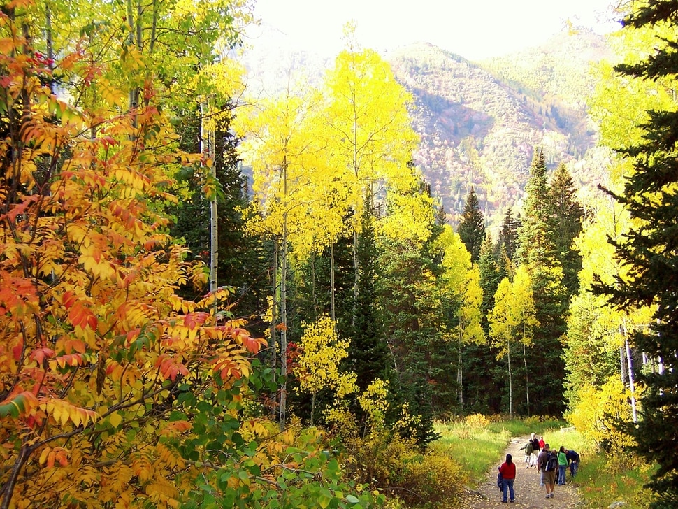 (Erin Alberty|The Salt Lake Tribune) Fall colors catch the afternoon sun on the Doughnut Falls trail in Big Cottonwood Canyon.