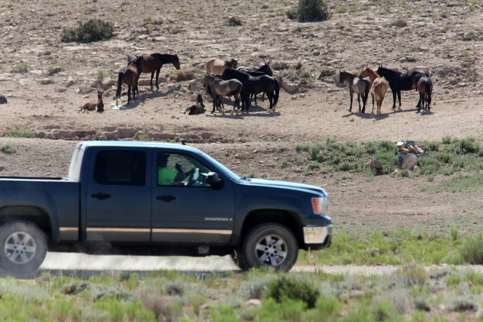 Photo courtesy of Laurie Kline Individuals on ATV's and motorcycles, some with Emery County Search and Rescue shirts and trailers, were alleged by a citizen to have been involved in hazing about 80 wild horses in the McCay Flats area of the San Rafael Swell July 9. The sheriff's department said the volunteers were in the vicinity for an unrelated reason.