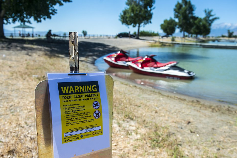 Chris Detrick | The Salt Lake Tribune A posted sign warning about a toxic algal bloom in Utah Lake Thursday, June 29, 2017.