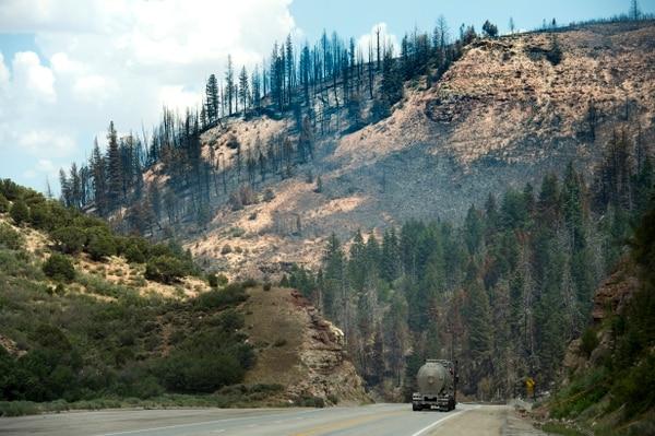 (Rick Egan | The Salt Lake Tribune) Burned trees show the devastation of the Dollar Ridge Fire along Highway 40, Tuesday, July 10, 2018.