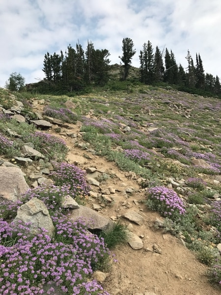 (Nate Carlisle   The Salt Lake Tribune) The trail between Peak 10,420 and Luckawaxen Lake is lined with wildflowers on Aug. 7, 2017.