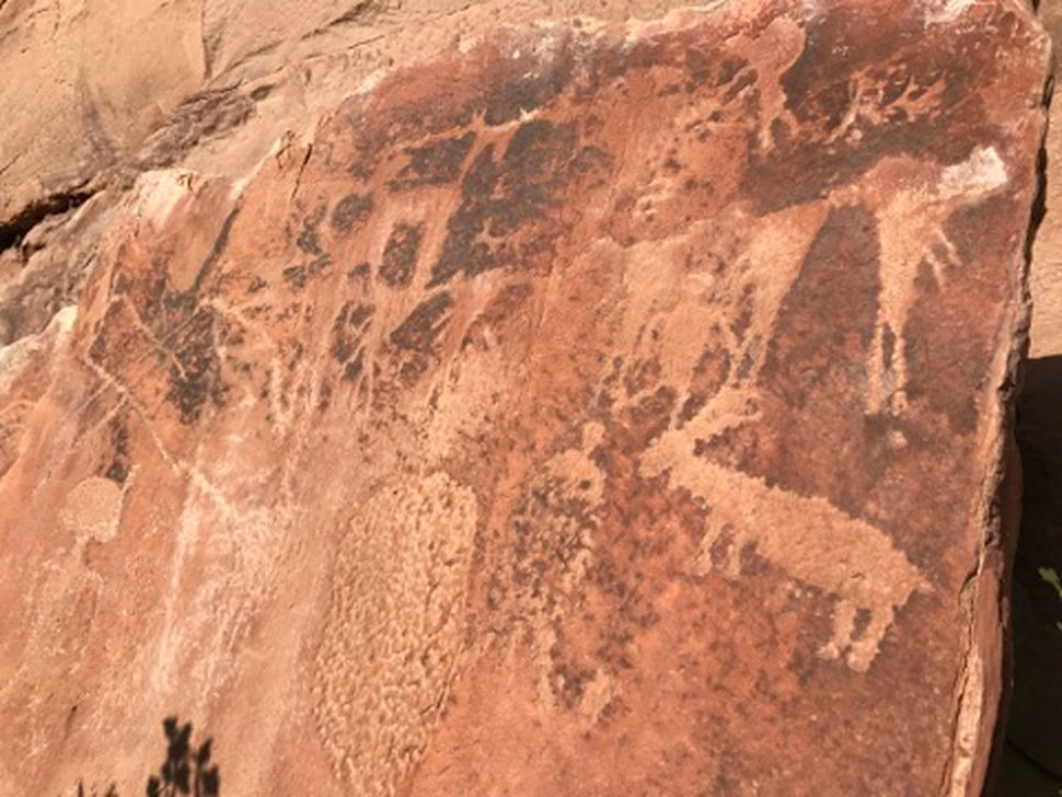 Petroglyphs sit on a rock wall on Sept. 10, 2017, alone Jones Hole Trail at Dinosaur National Monument. Photo by Nate Carlisle/The Salt Lake Tribune