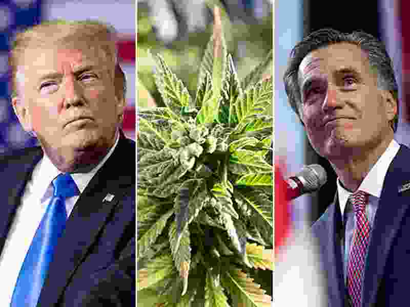 Utah voter enthusiasm driven by Trump, Romney and marijuana, poll shows