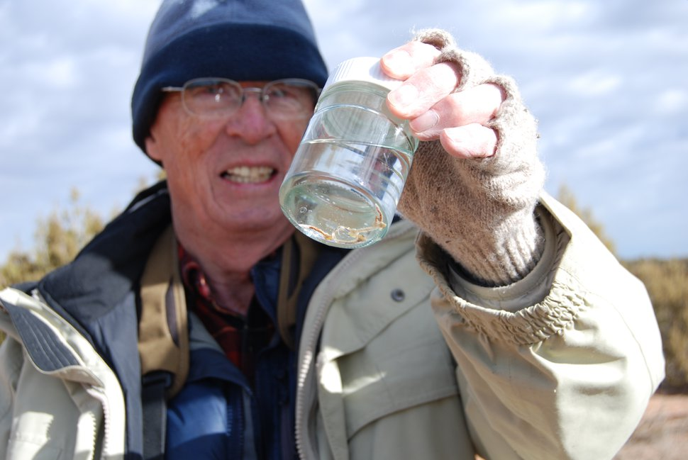 (Brian Maffly | The Salt Lake Tribune) Botanist Kay Shumway displays beetle larvae he recovered from dying junipers in San Juan County. A retired science educator from Blanding, Shumway was the first to document a troubling die-off of the hardy tree species and is now helping federal scientists determine what is killing the junipers.