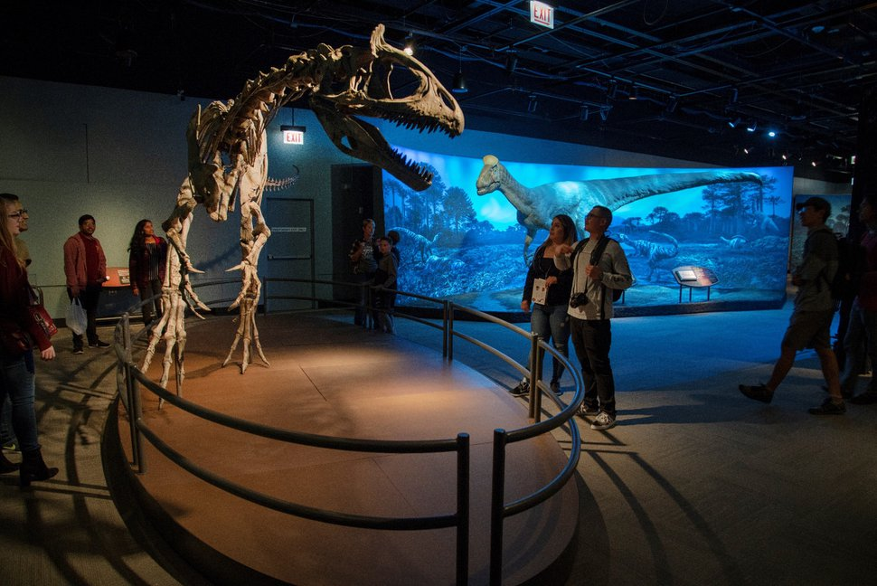 (Photo courtesy of the Natural History Museum of Utah) A recovered fossil of a cryolophosaurus, a 25-foot-long dinosaur discovered in Antarctica, is a highlight of the exhibition