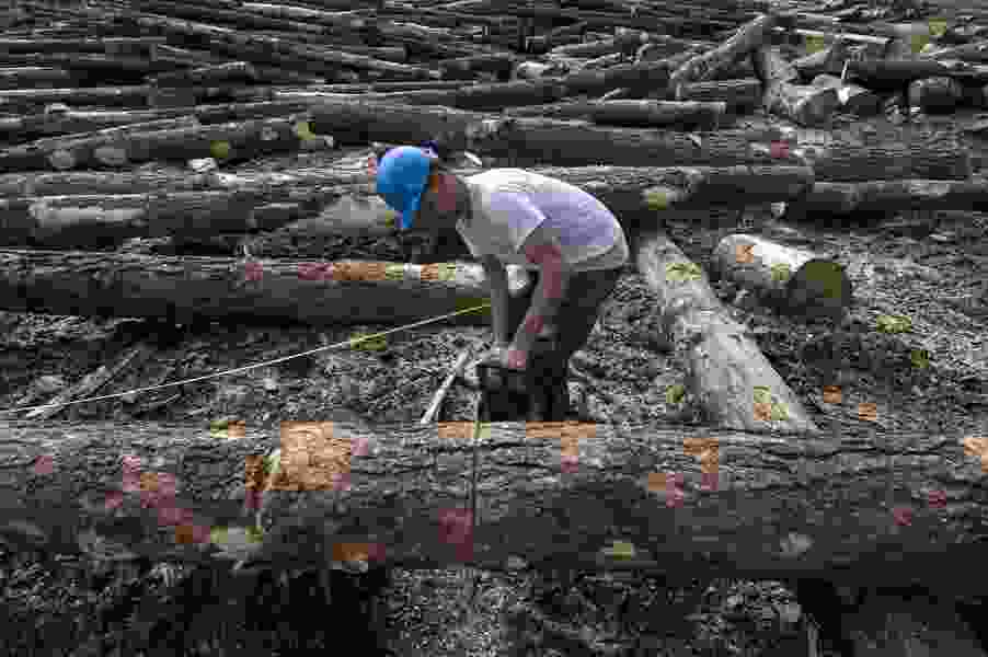 U.S. forest managers want judge to revisit tree-cutting ban