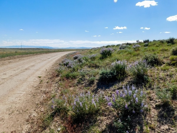 Erin Alberty | The Salt Lake Tribune Scenes from the Oregon Trail: Natrona County Road 319 follows the original Oregon Trail into rural Wyoming west of Casper, passing by wagon wheel ruts and abundant flora and fauna of the western plains.