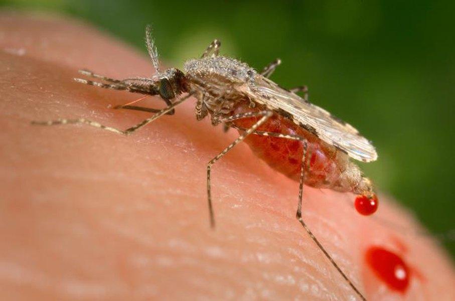 West Nile Virus ile ilgili görsel sonucu