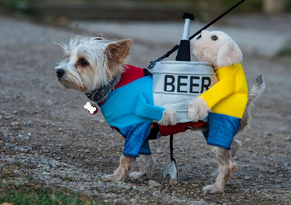 (Rick Egan | The Salt Lake Tribune) A dog named Diesel, wears a costume as he leads his owner Anne Crook, to the Dog Days in the Maze at Wheeler Farm, Monday, Oct. 26, 2020.