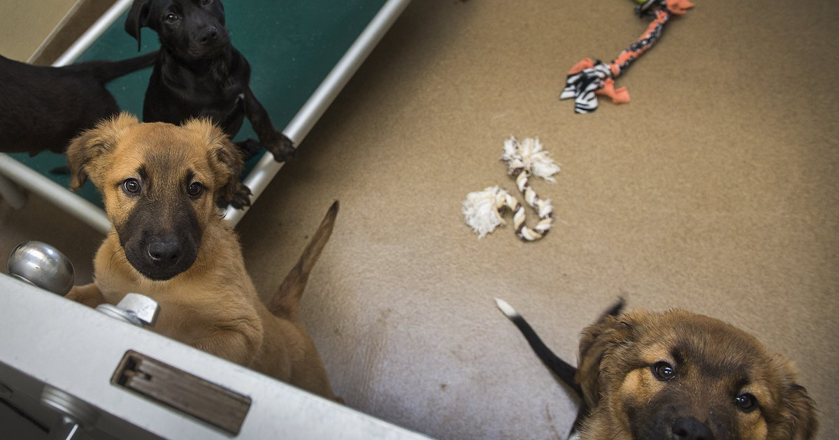 Pet Stores With Dogs In Utah
