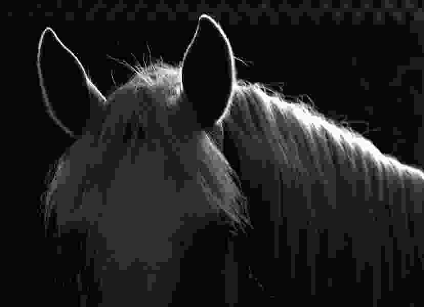 Contagious horse and cattle virus found in two Utah counties