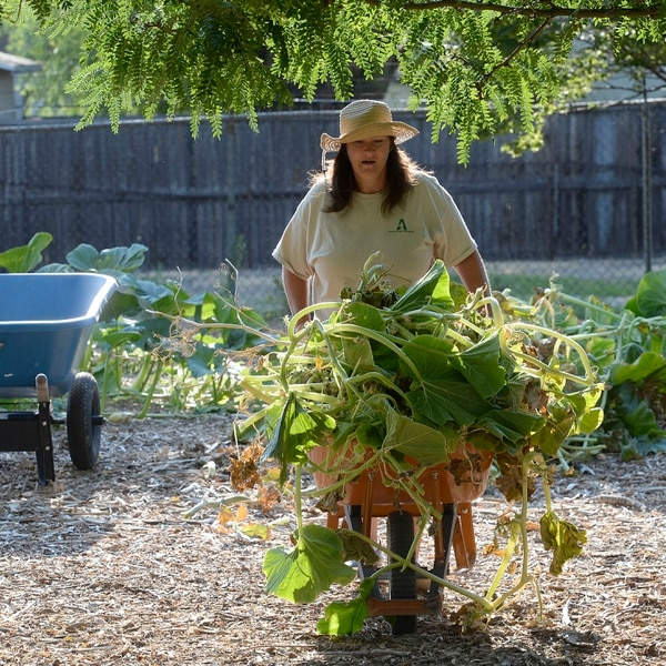(Al Hartmann | The Salt Lake Tribune) Trina wheels a cart full of pumpkin vines to the composting area at the Wasatch Community Gardens' Green Team farm on Wednesday, Aug. 2. A group of homeless and formerly homeless women tend a 1.5-acre vegetable farm on land owned by the Salt Lake City's Redevelopment Agency. The women are paid as they learn about agriculture and business, and they receive a break from the stresses of their daily lives.