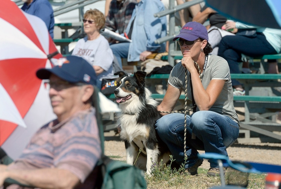 (Al Hartmann | The Salt Lake Tribune) Spectators and dogs watch the action during the first round of the Supreme Source Solider Hollow Classic Sheep Dog Trials, Friday Sept. 1 in Midway. The Supreme Source Soldier Hollow Classic brings together many of the world's top sheep dogs from Scotland, Ireland, South Africa, Canada, Germany and the United States. The trials last through Sept. 4.