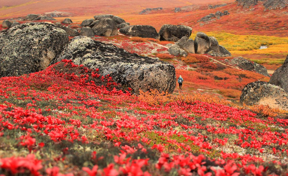 (Photo courtesy of Bering Land Bridge National Preserve) Fall colors at the Serpentine hot springs in Bering Land Bridge National Preserve.