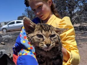 (Photo by Tolga Katas) Lavonna Barlow holds Cutie, one of the family's cats, while surveying the remains of the family's house in Veyo, in Washington County, on Tuesday, July 14, 2020, the day after a wildfire destroyed the home. Cutie was singed; others in the cat's litter died in the fire.
