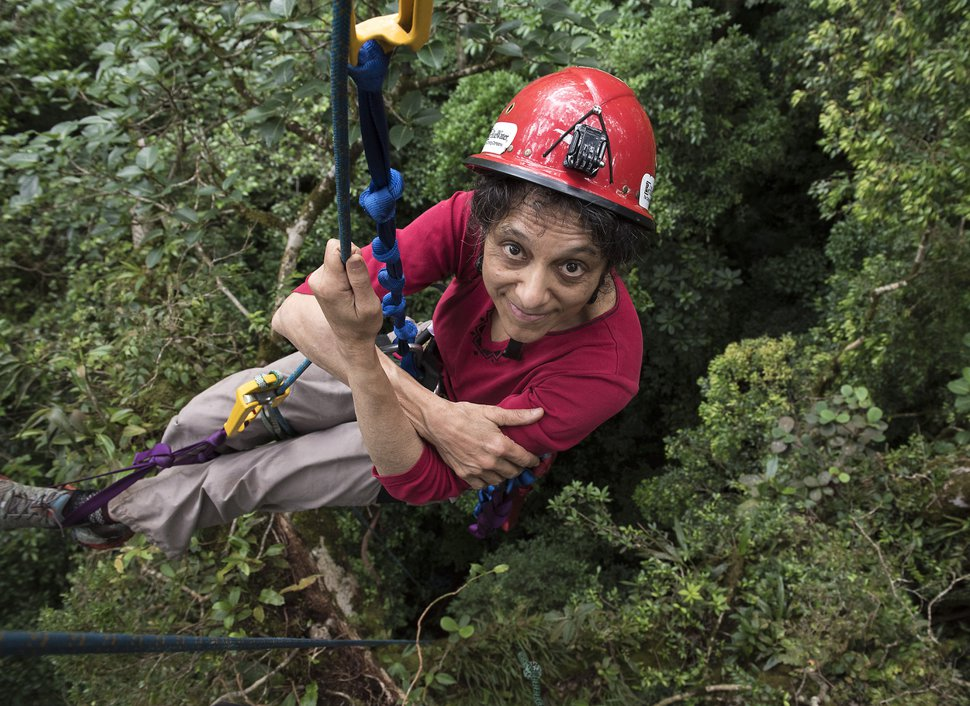 (Sybil Gotsch, via AP) University of Utah ecologist Nalini Nadkarni studies the rainforest canopy in the Monteverde region of Costa Rica in 2014. Nadkarni's childhood of climbing trees shaped her career and now she's hoping she can help kids become interested in science in a new way: Barbies. Nadkarni has long created her own