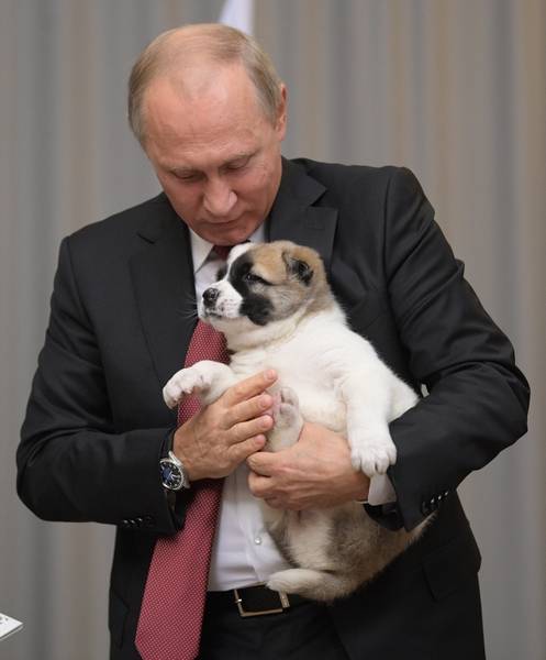 Russian President Vladimir Putin holds a puppy presented by Turkmenistan's President Gurbanguly Berdymukhamedov during their meeting in the Bocharov Ruchei residence in the Black Sea resort of Sochi, Russia, Wednesday, Oct. 11, 2017. The presidents met at the sidelines of a summit of leaders of ex-Soviet nations in Sochi. (Alexei Druzhinin/Sputnik, Kremlin Pool Photo via AP)