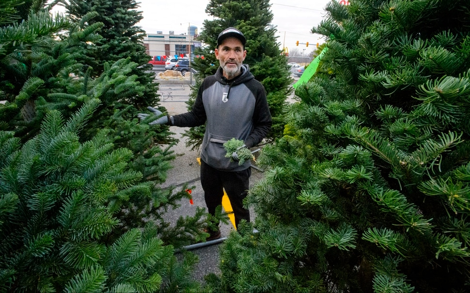 Cut Down Your Own Christmas Tree at These Three Spots