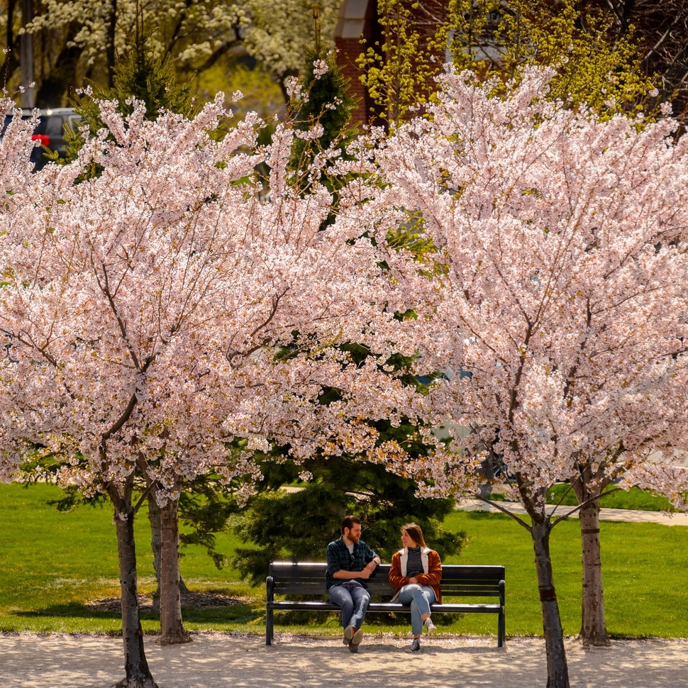 (Trent Nelson | The Salt Lake Tribune) A couple sites on a bench among the cherry blossoms surrounding the state Capitol in Salt Lake City on Saturday, April 11, 2020.
