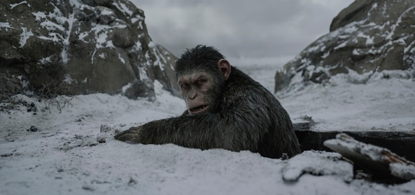 | 20th Century Fox Caesar (performed by Andy Serkis) must lead his followers away from human danger in the action thriller