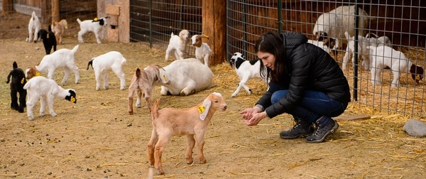 (Trent Nelson | The Salt Lake Tribune) Volunteer Sabrina Martinez plays with the kids at the East African Refugee Goat Farm, Saturday March 24, 2018.