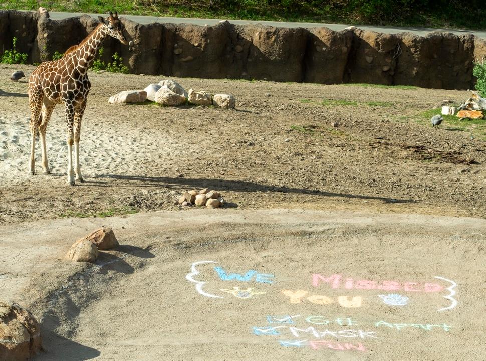 (Rick Egan | The Salt Lake Tribune) The Hogle Zoo opened up again for visitors, Saturday May 2, 2020