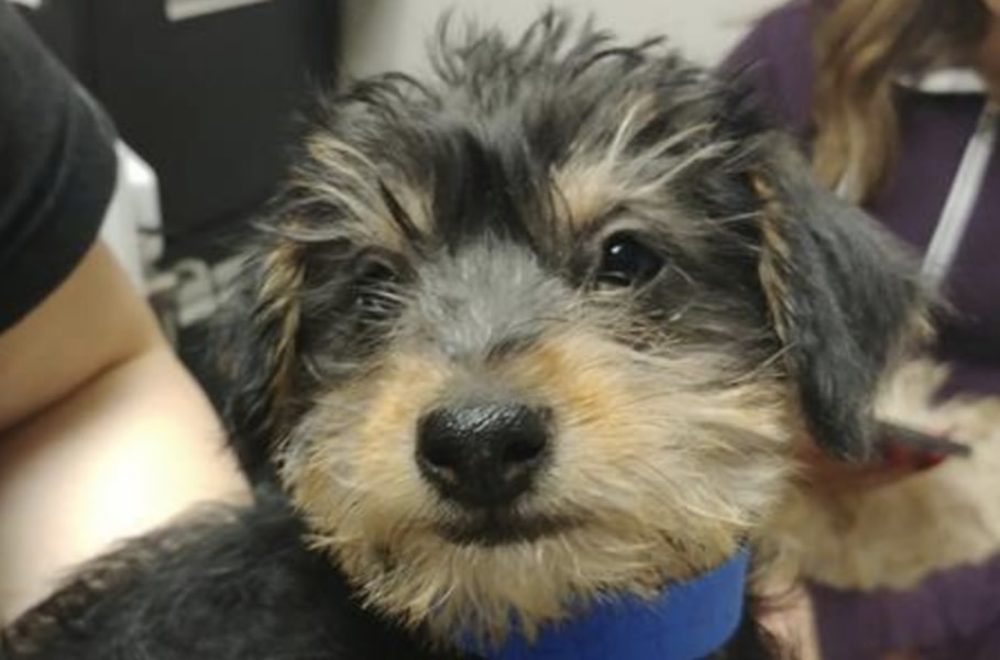 Puppy stolen from Utah Humane Society found safe in Idaho